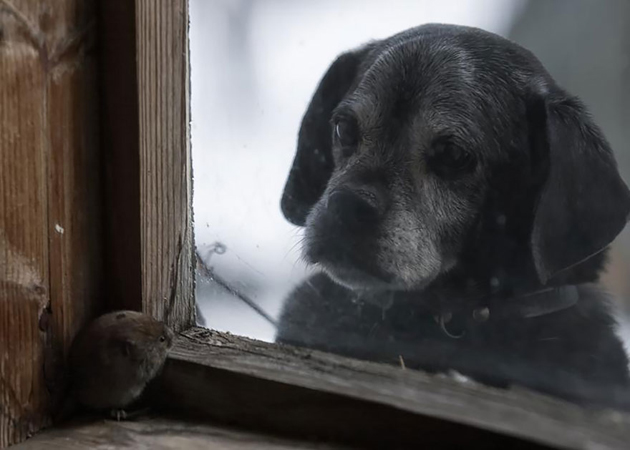 Fine-looking Photos of Animals Looking through Windows (14)