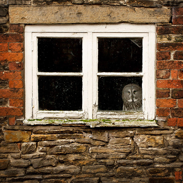 Fine-looking Photos of Animals Looking through Windows (17)
