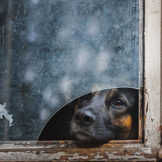 Fine-looking Photos of Animals Looking through Windows (4)
