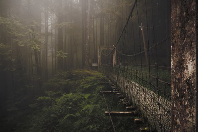 Forest Bridge, Alishan Mountain, Taiwan