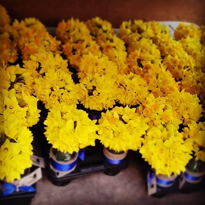 Romantic & Elegant flower bouquets (10)
