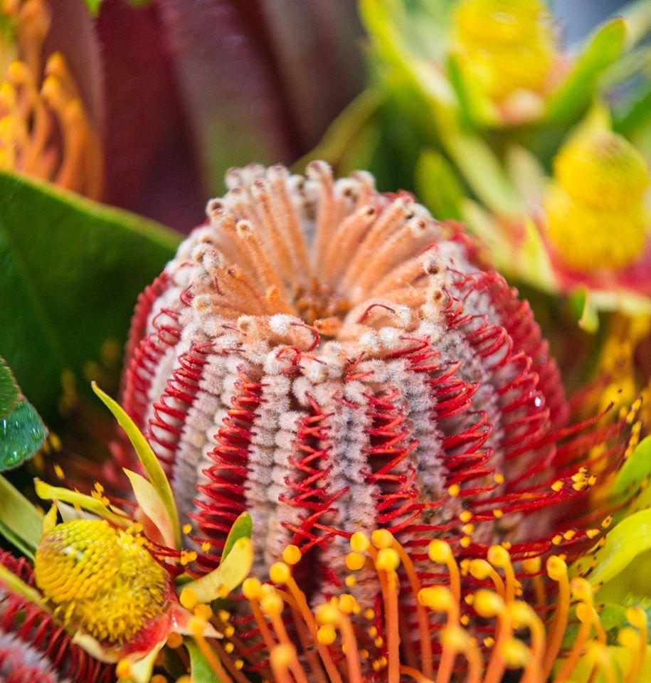 Romantic & Elegant flower bouquets (11)