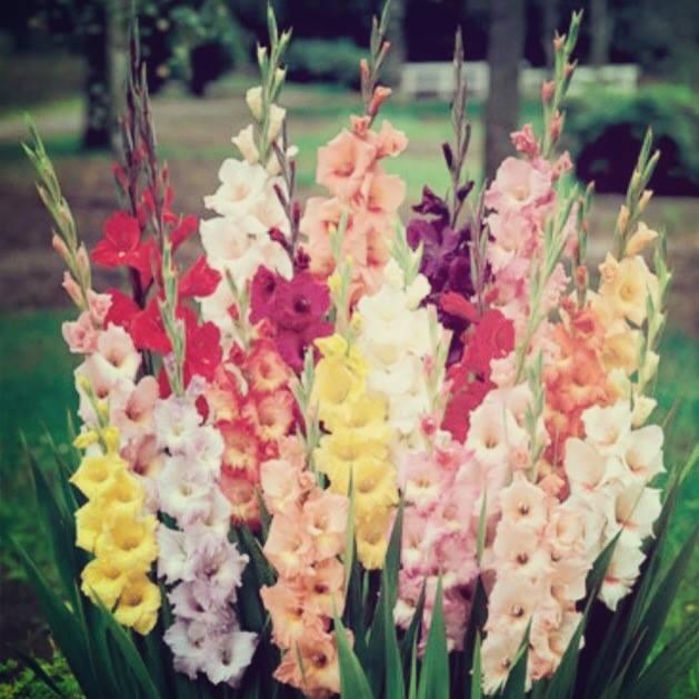Romantic & Elegant flower bouquets (8)