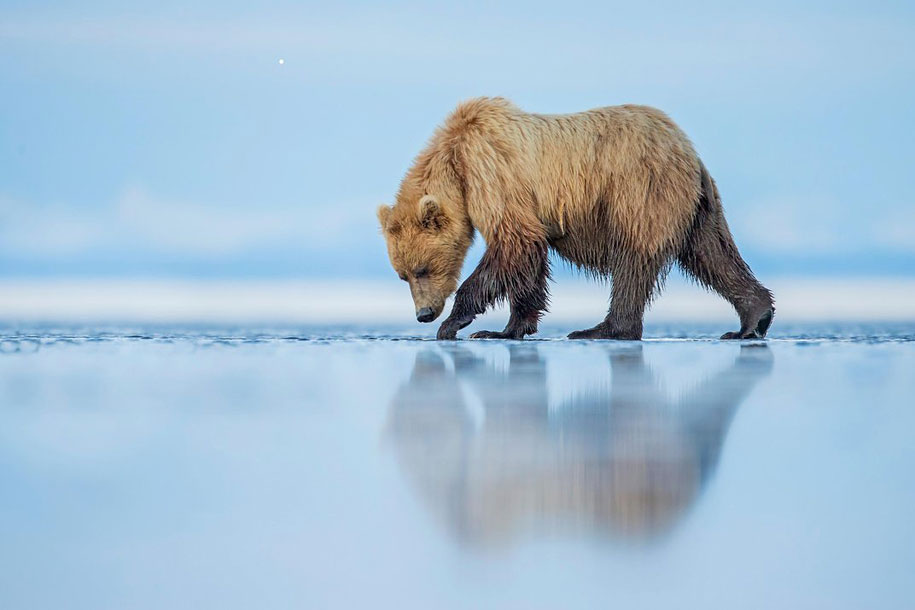 12th Annual Smithsonian Photo Competition best 25 Finale (14)
