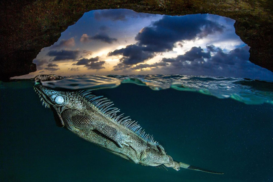 12th Annual Smithsonian Photo Competition best 25 Finale (16)
