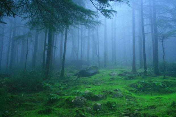 Deodar Forest, Himachal Pradesh