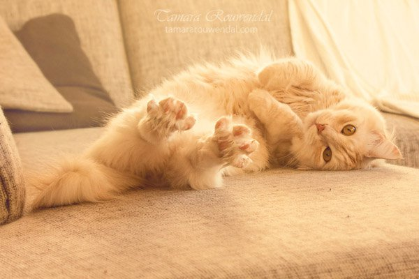 Tamara Rouwendal Beautiful Shots on Cat Photography (1)