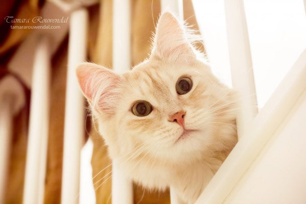 Tamara Rouwendal Beautiful Shots on Cat Photography (10)