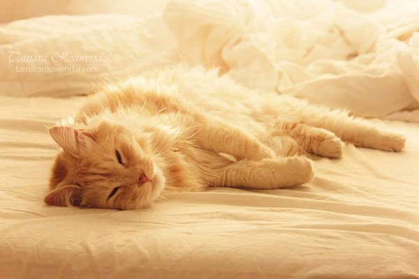 Tamara Rouwendal Beautiful Shots on Cat Photography (12)