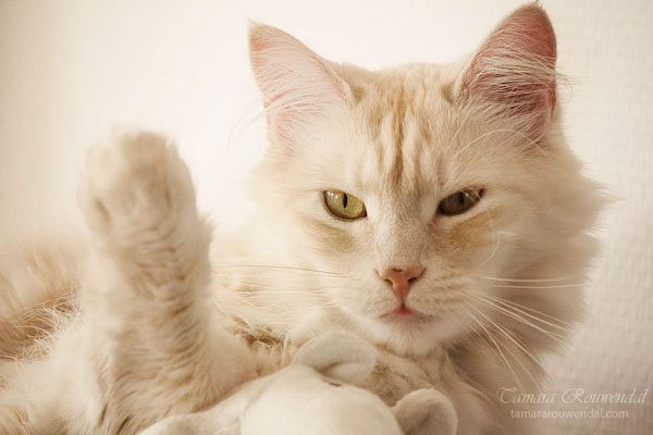 Tamara Rouwendal Beautiful Shots on Cat Photography (15)