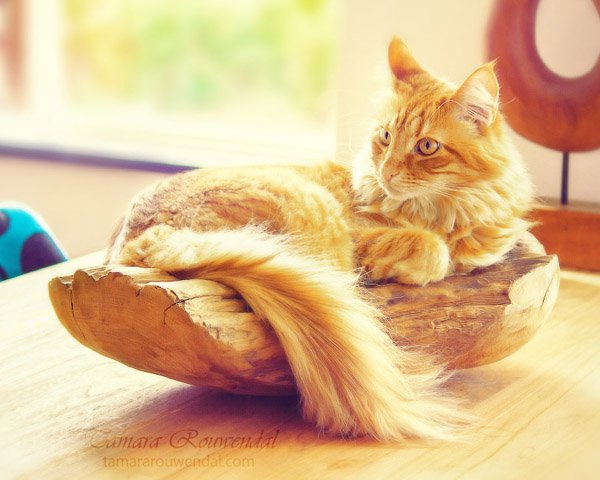 Tamara Rouwendal Beautiful Shots on Cat Photography (16)