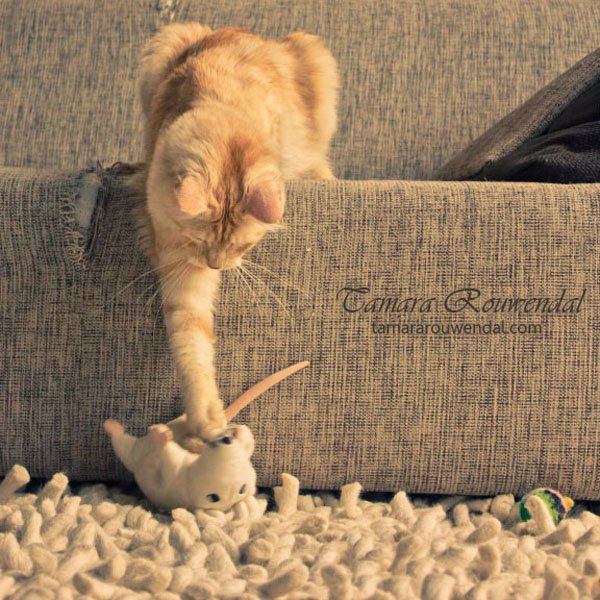 Tamara Rouwendal Beautiful Shots on Cat Photography (17)