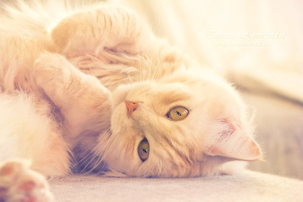 Tamara Rouwendal Beautiful Shots on Cat Photography (2)