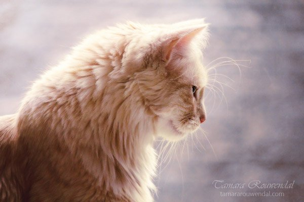 Tamara Rouwendal Beautiful Shots on Cat Photography (3)