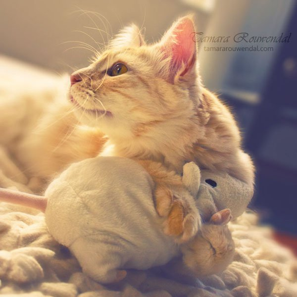 Tamara Rouwendal Beautiful Shots on Cat Photography (4)