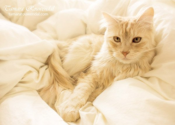Tamara Rouwendal Beautiful Shots on Cat Photography (5)