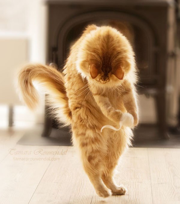 Tamara Rouwendal Beautiful Shots on Cat Photography (7)
