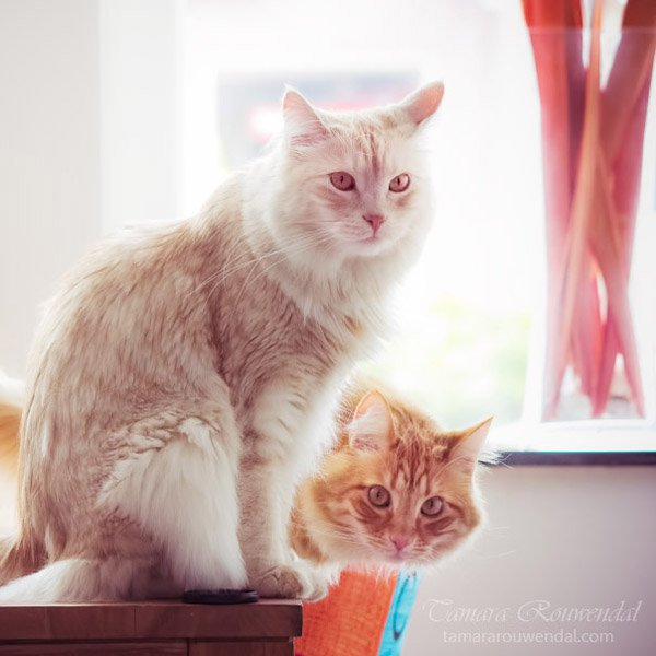 Tamara Rouwendal Beautiful Shots on Cat Photography (8)