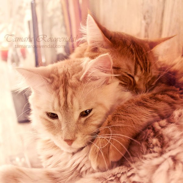 Tamara Rouwendal Beautiful Shots on Cat Photography (9)