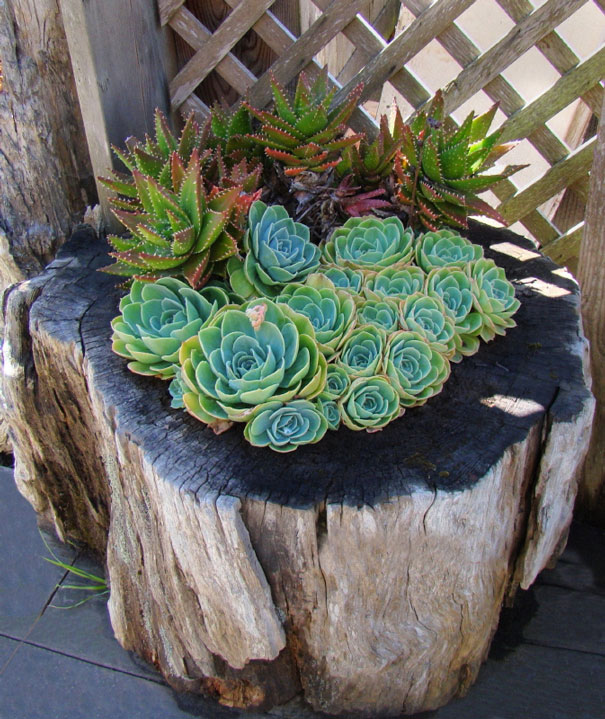 Beautiful Blossom Planters from Old Tree Stumps (11)