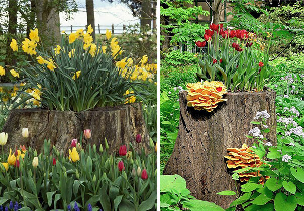 Beautiful Blossom Planters from Old Tree Stumps (12)