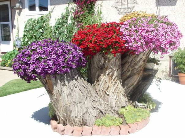 Beautiful Blossom Planters from Old Tree Stumps (15)