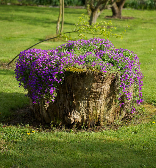Beautiful Blossom Planters from Old Tree Stumps (18)