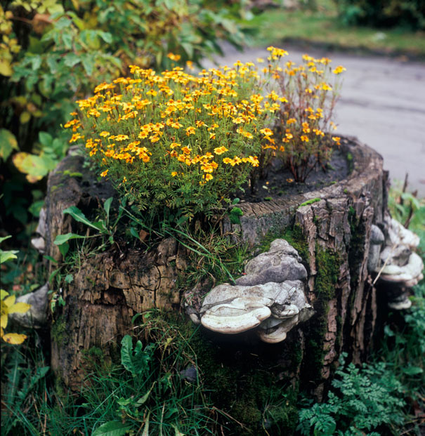 Beautiful Blossom Planters from Old Tree Stumps (3)
