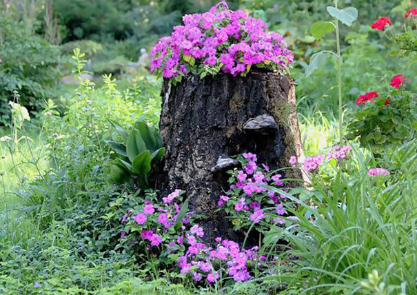 Beautiful Blossom Planters from Old Tree Stumps (6)