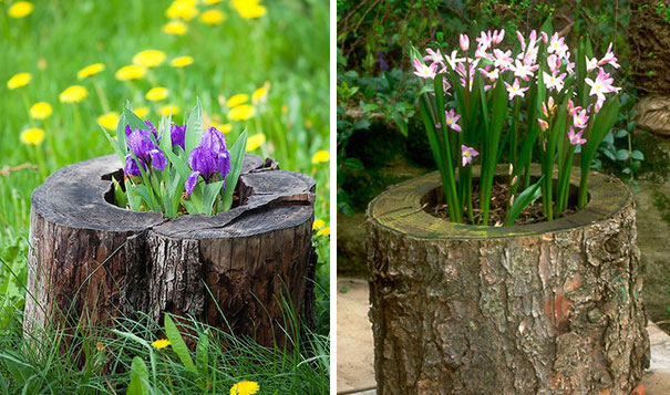 Beautiful Blossom Planters from Old Tree Stumps (8)