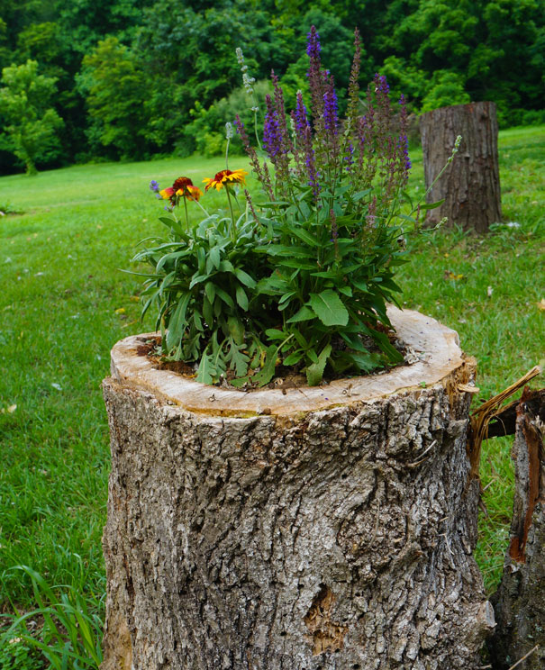Beautiful Blossom Planters from Old Tree Stumps (9)