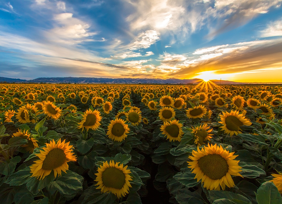 Field Of Sun by IMGIMAGERY on 500px