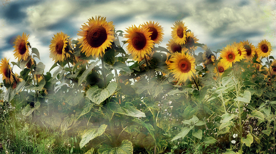 SummerSun by Irene Weiss on 500px