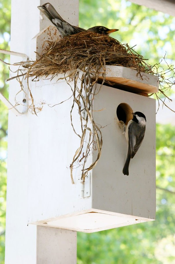 innovative ideas and creativity by bird on building their nests (1)