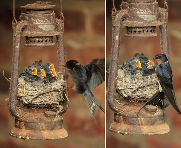 innovative ideas and creativity by bird on building their nests (11)