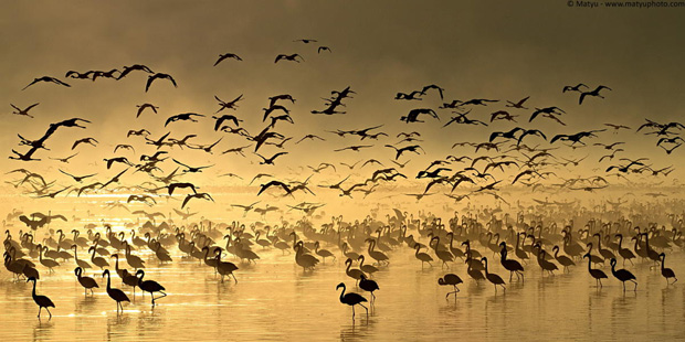 Flight of the Flamingos by Marco Mattiussi on 500px
