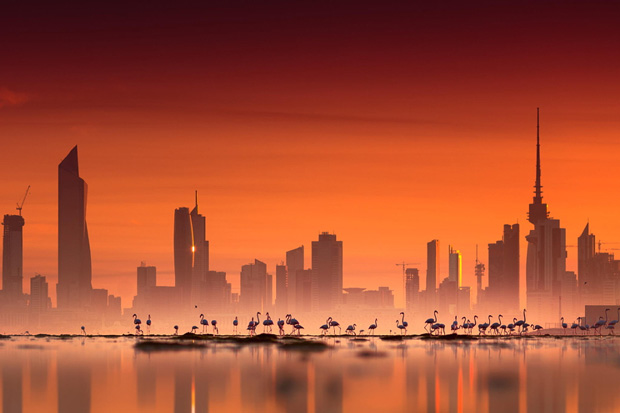 Kuwait Flamingos by Mohammed ALSULTAN on 500px