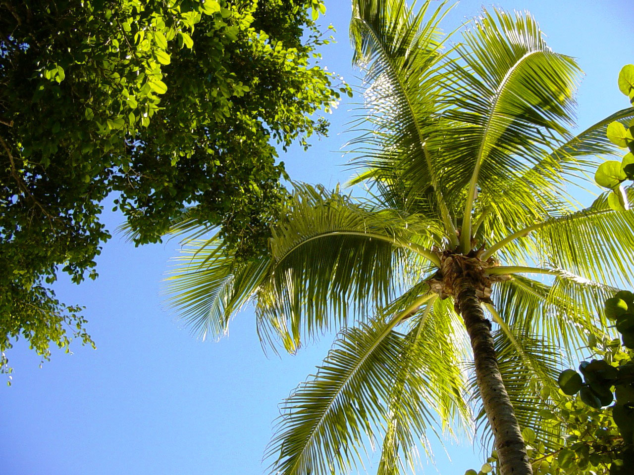 Pictures of Different Types of Palm Trees (10)