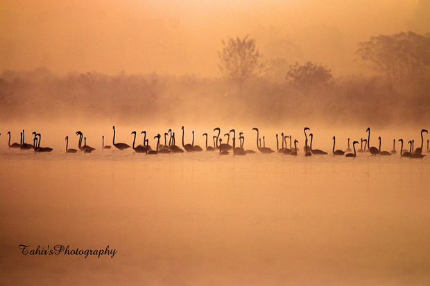 The Flamingoes by Nature images on 500px