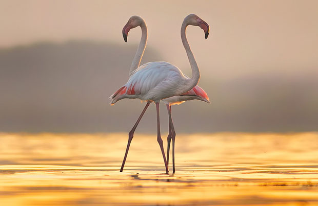 flamingo bird by Martin Tasev on 500px