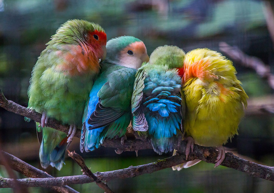 Beautiful Cuddling Birds photos (10)