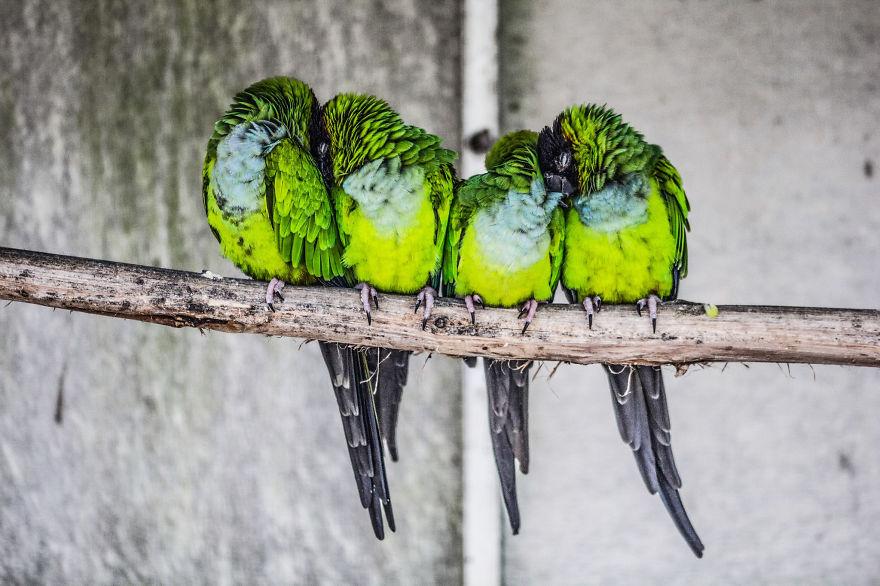 Beautiful Cuddling Birds photos (11)