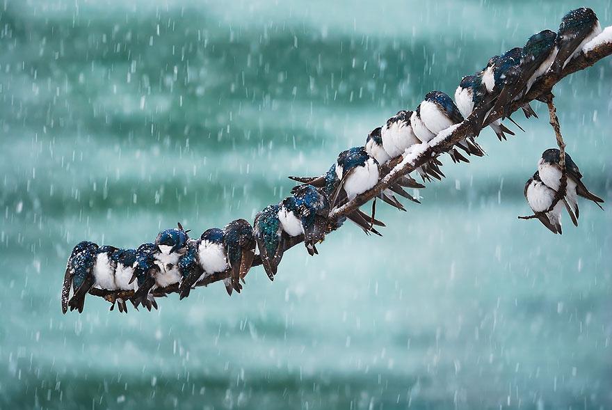 Beautiful Cuddling Birds photos (12)