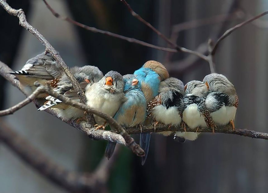 Beautiful Cuddling Birds photos (13)
