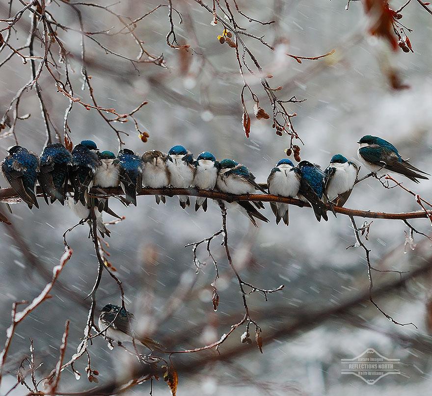 Beautiful Cuddling Birds photos (14)