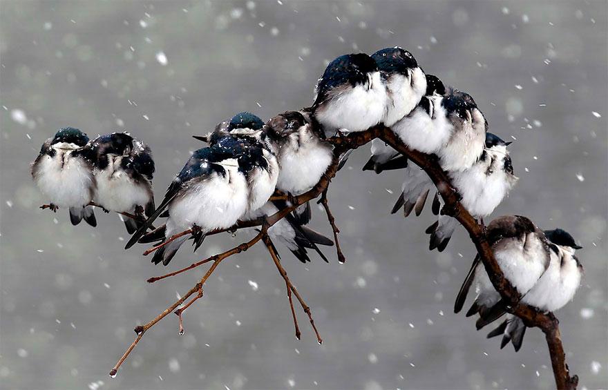Beautiful Cuddling Birds photos (15)