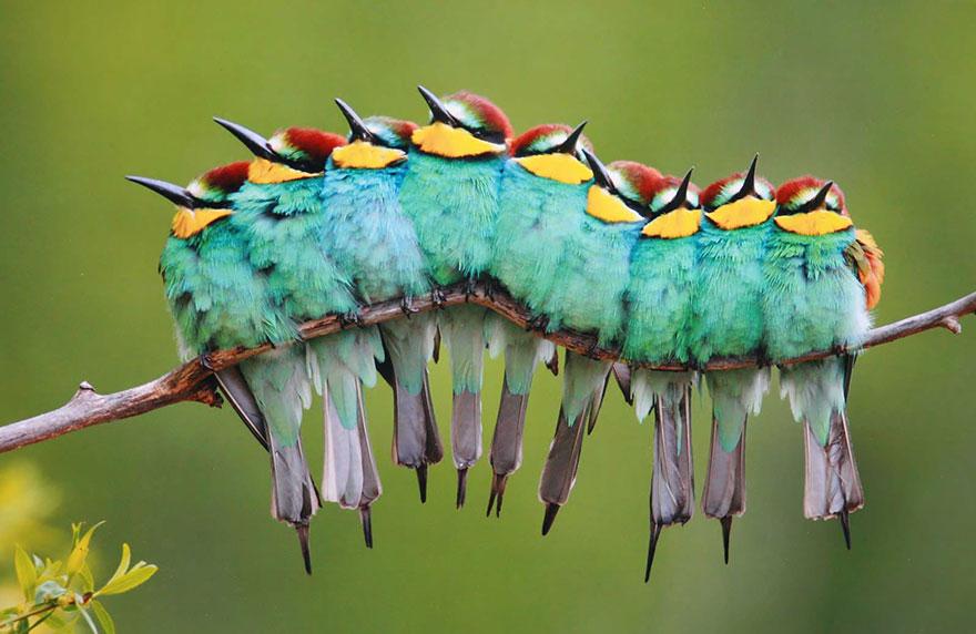 Beautiful Cuddling Birds photos (16)
