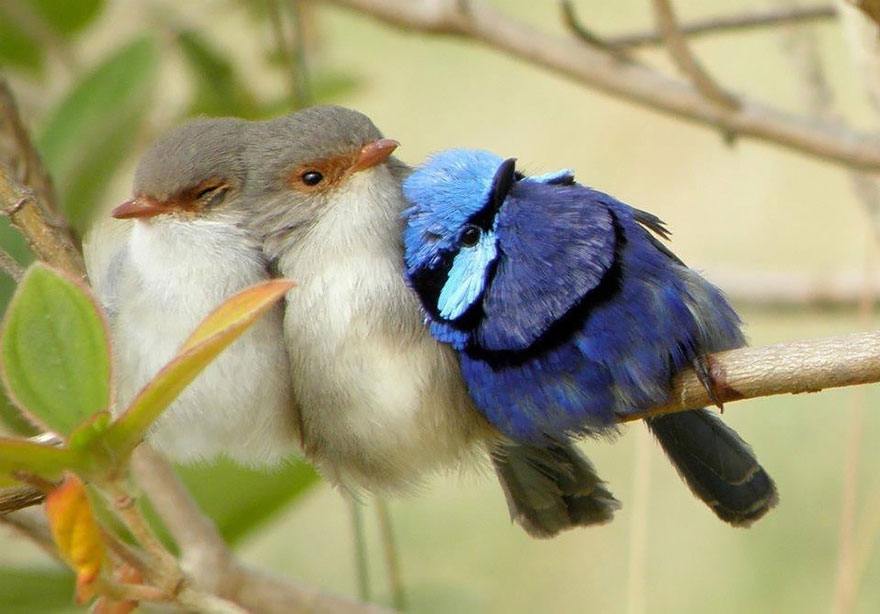 Beautiful Cuddling Birds photos (2)