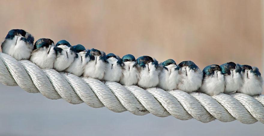 Beautiful Cuddling Birds photos (3)