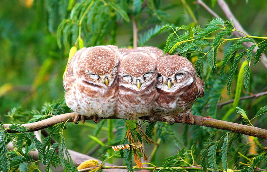 Beautiful Cuddling Birds photos (4)